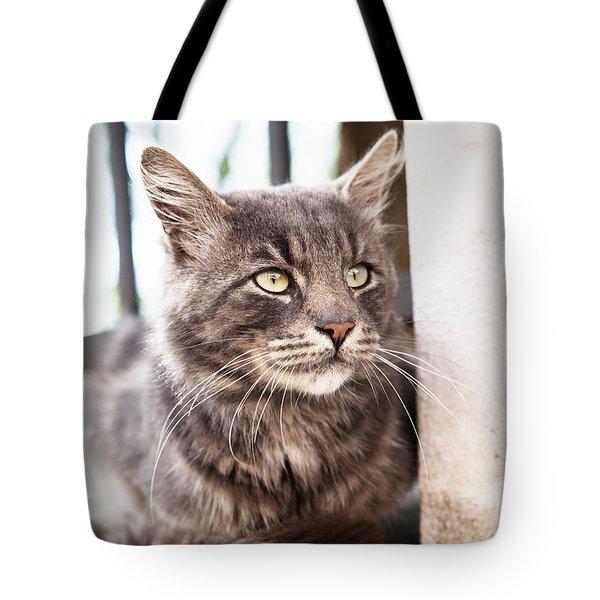 Cat #2480 Tote Bag