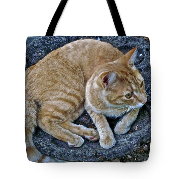 Cat In The Bath Tote Bag by Gwyn Newcombe
