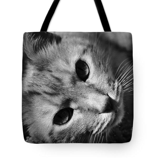 Cat Naps Tote Bag