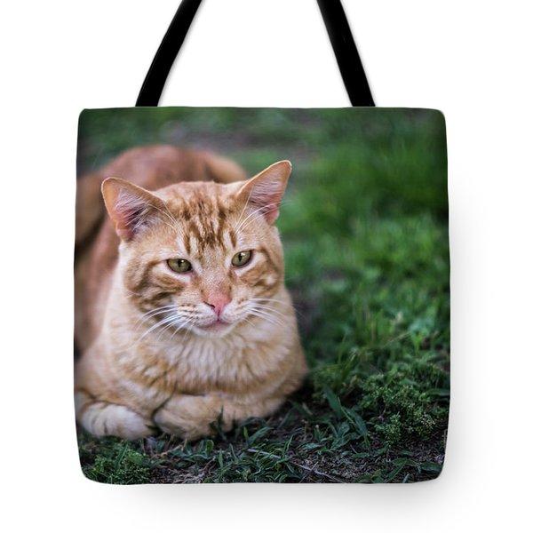 Tote Bag featuring the photograph Cat On Genoves Park Cadiz Spain by Pablo Avanzini