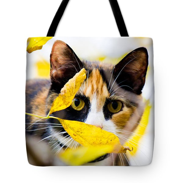 Cat On The Prowl Tote Bag