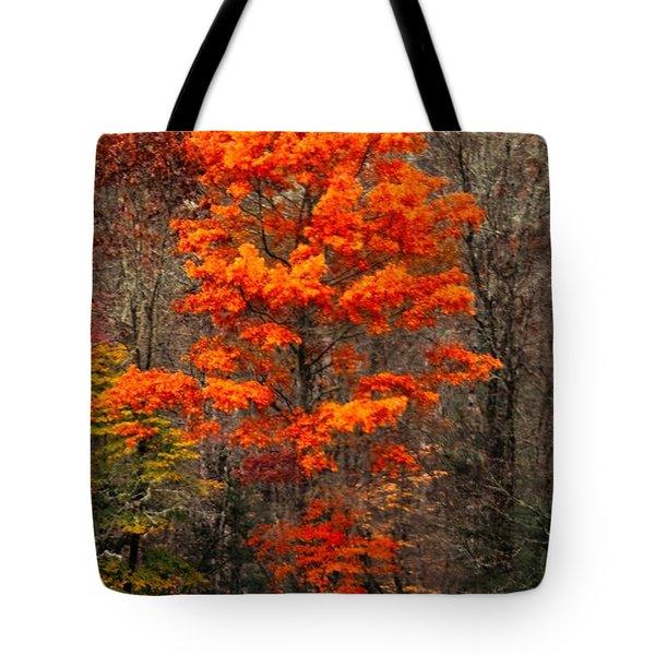 Cataloochee Color Tote Bag