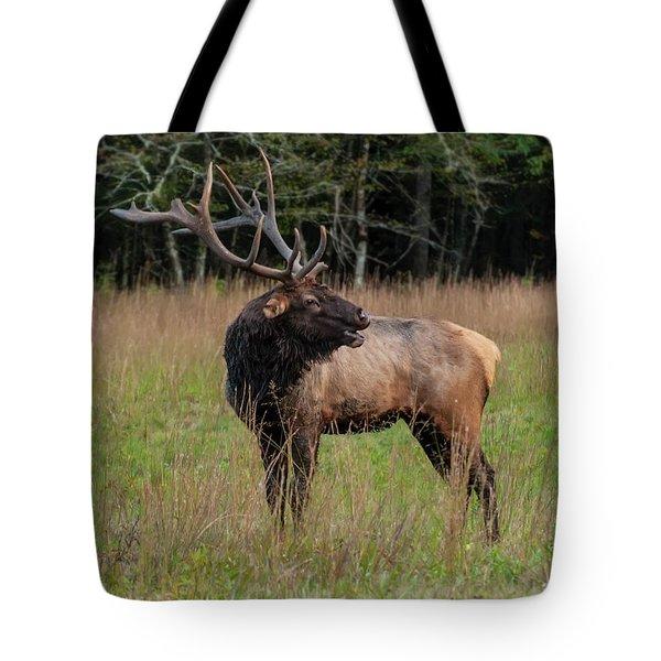 Tote Bag featuring the digital art Cataloochee Valley Elk  by Chris Flees
