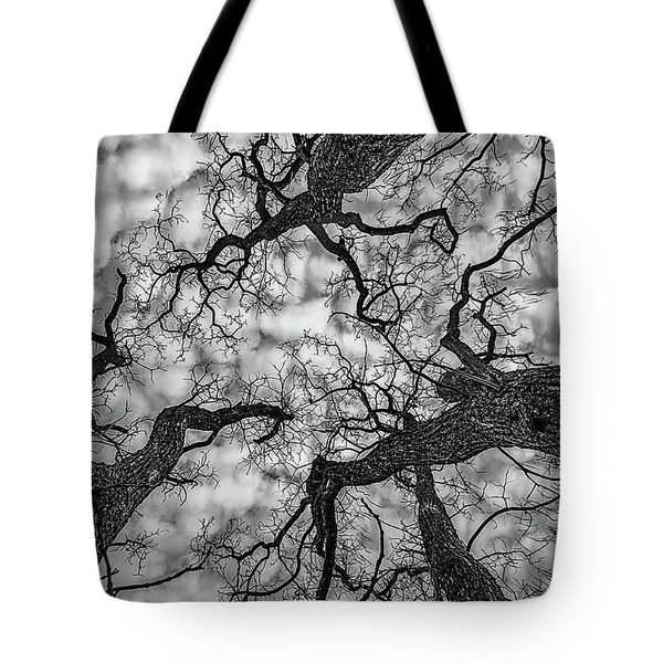 Catalpa And Altostrato Q Tote Bag