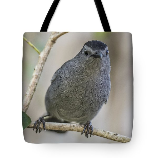 Catbird Portrait Tote Bag