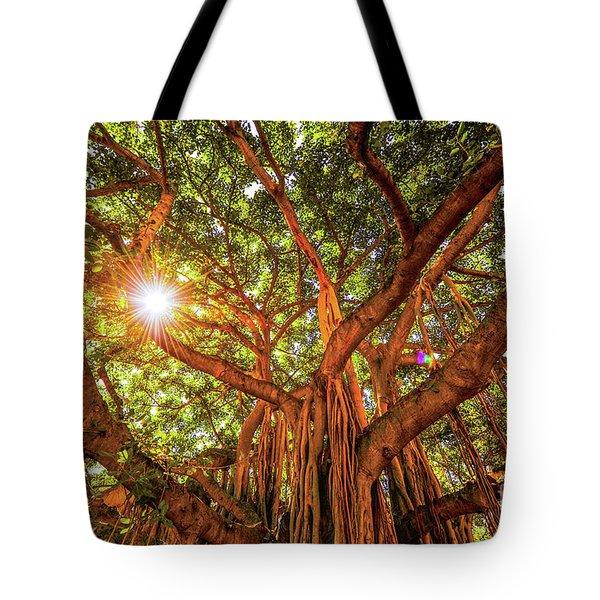 Catch A Sunbeam Under The Banyan Tree Tote Bag