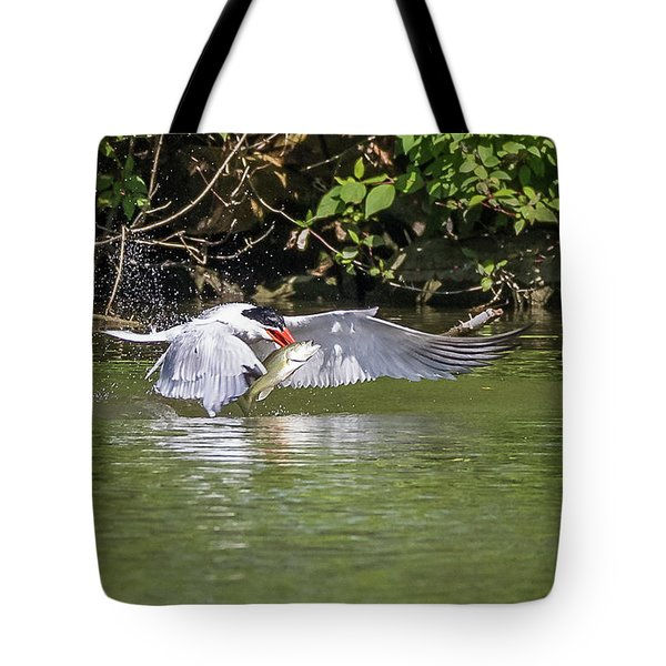 Catch Of The Day - 1 Tote Bag