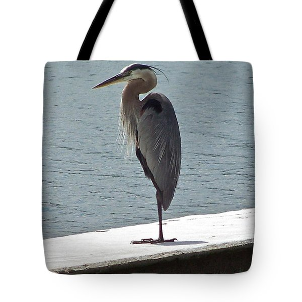 Tote Bag featuring the photograph Catching Some Morning Rays by Carol  Bradley