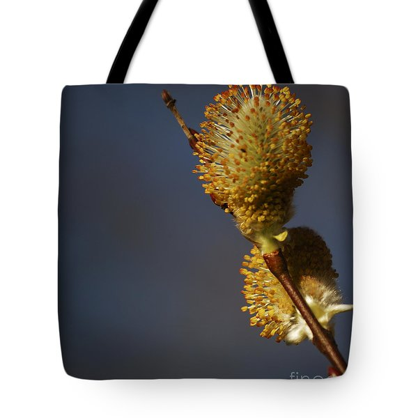 Catkins Tote Bag by Randy Bodkins