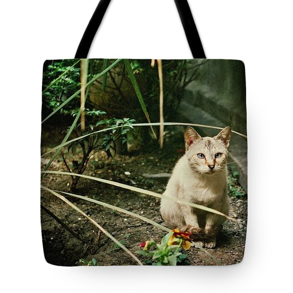 Cats Are Amazing Ll  Tote Bag