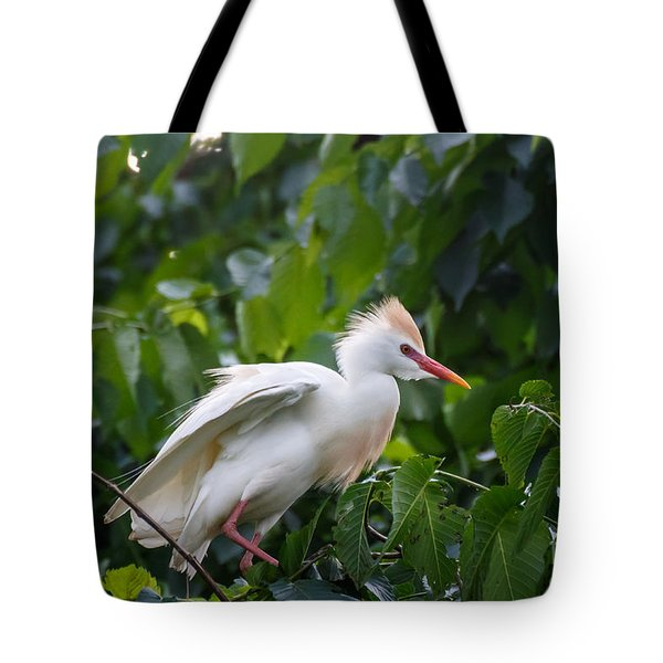 Cattle Egret At Rest Tote Bag