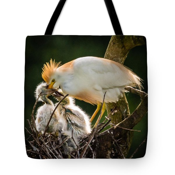 Tote Bag featuring the photograph Cattle Egret Feeding Babies by Gregory Daley  PPSA