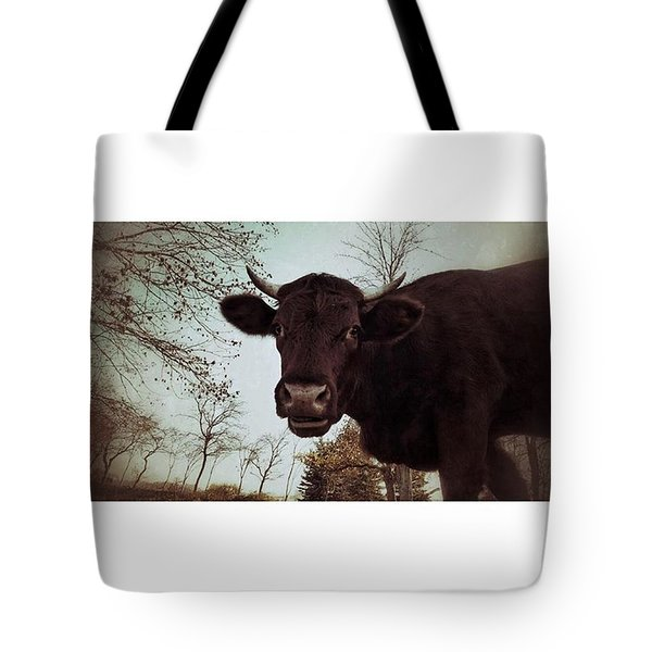 #cattle #kuh #rind #weide #herbst Tote Bag
