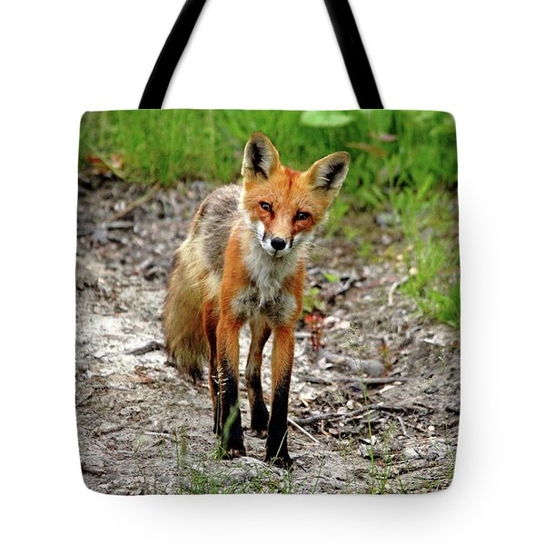 Tote Bag featuring the photograph Cautious But Curious Red Fox Portrait by Debbie Oppermann