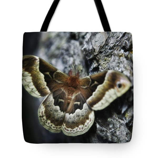Cecropia Moth Tote Bag