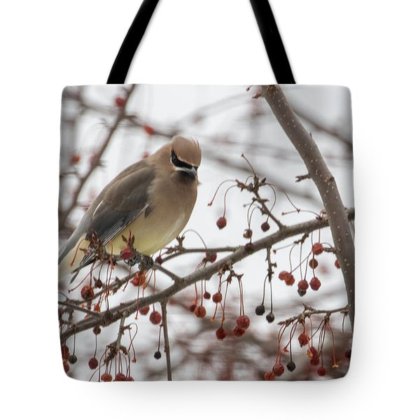 Tote Bag featuring the photograph Cedar Wax Wing  by Betty Pauwels