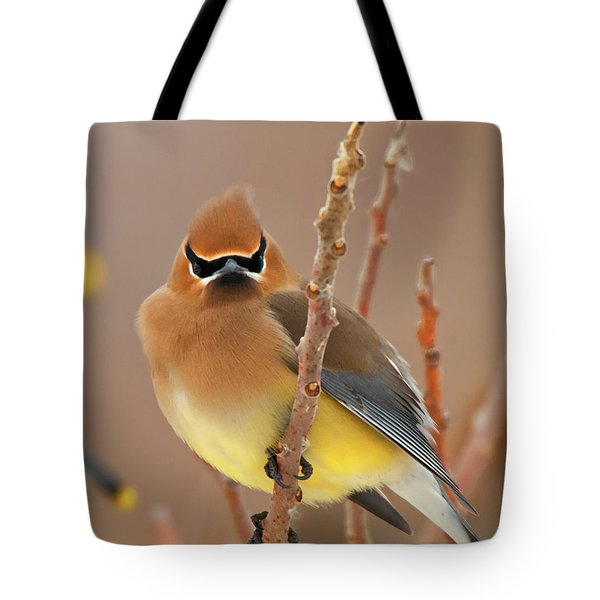 Cedar Wax Wing Tote Bag by Carl Shaw