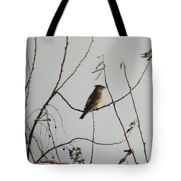 Cedar Wax Wing In Tree Tote Bag by Kenneth Willis