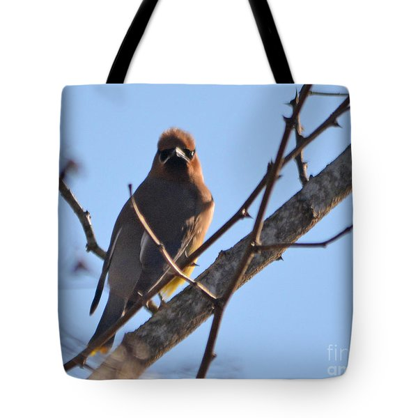 Cedar Wax Wing On The Lookout Tote Bag by Barbara Dalton