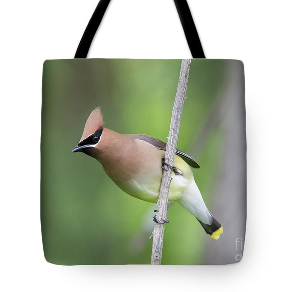 Tote Bag featuring the photograph Cedar Waxwing 1 by Chris Scroggins