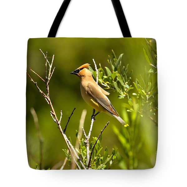 Cedar Waxwing At Glacier Tote Bag by Adam Jewell