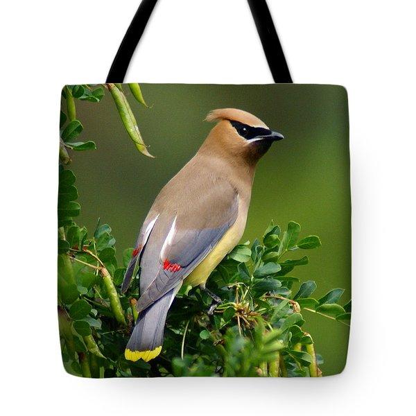 Cedar Waxwing Tote Bag by Ben Upham III