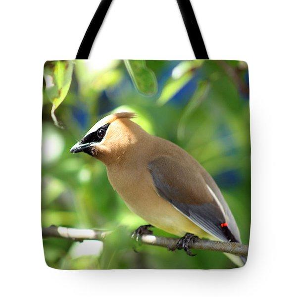 Cedar Waxwing Curiosity Tote Bag