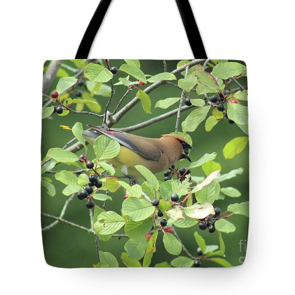 Cedar Waxwing Eating Berries Tote Bag by Maili Page