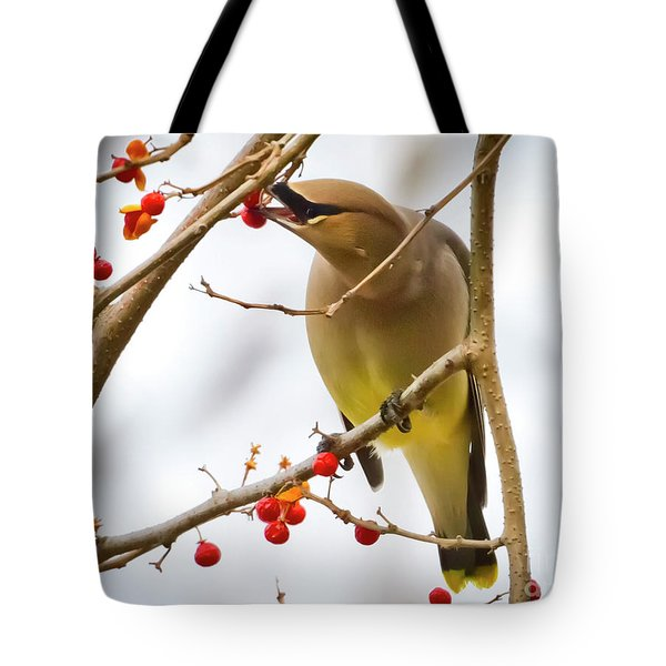 Cedar Waxwing Feeding  Tote Bag