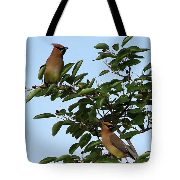 Cedar Waxwing Pair Tote Bag by Mark A Brown