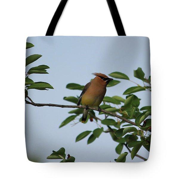 Cedar Waxwing Profile Tote Bag