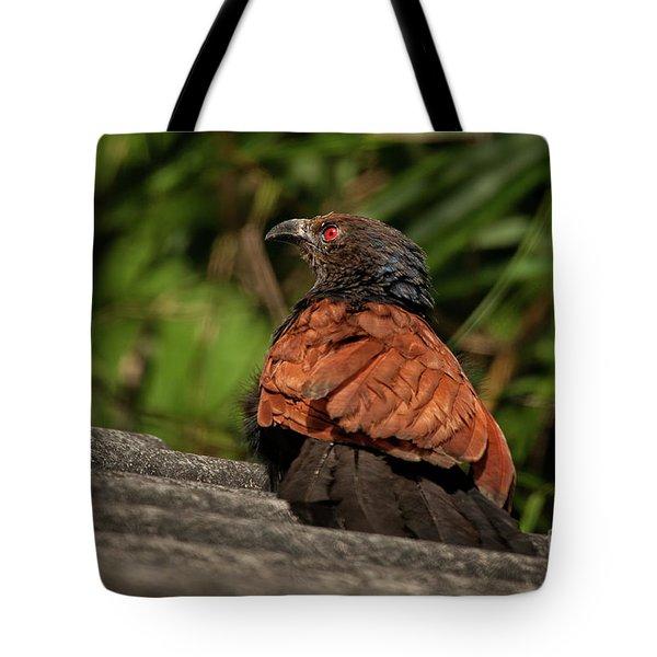 Centropus Sinensis Tote Bag