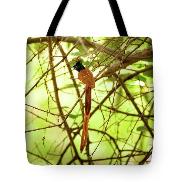 Ceylon Paradise Flycatcher Tote Bag