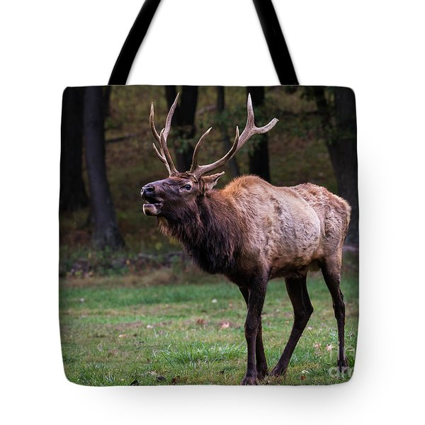 Tote Bag featuring the photograph Challenger by Andrea Silies