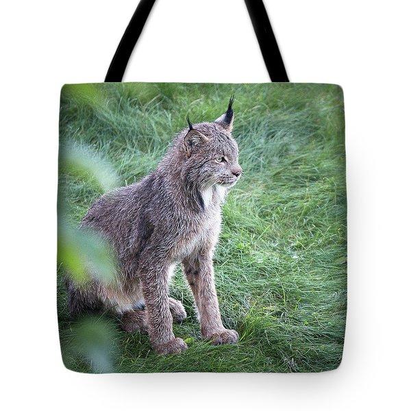 Champion Mama Lynx Tote Bag