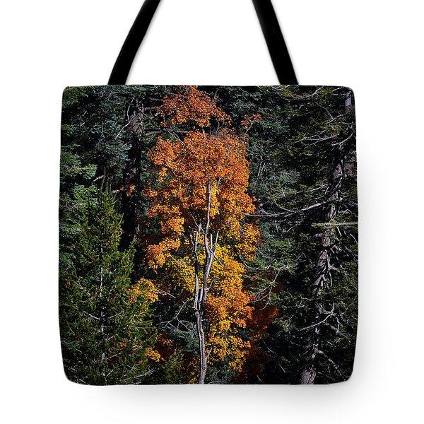 Change Of Seasons Tote Bag