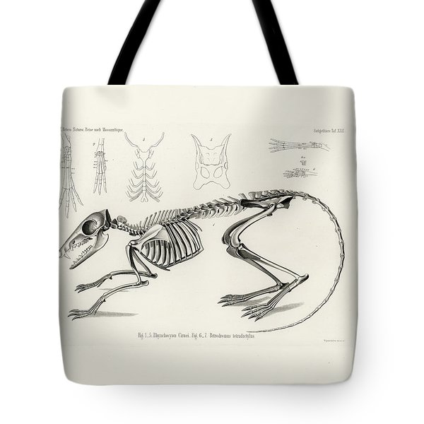 Checkered Elephant Shrew Skeleton Tote Bag