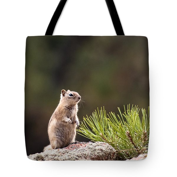 Tote Bag featuring the photograph Checking Things Out by Monte Stevens
