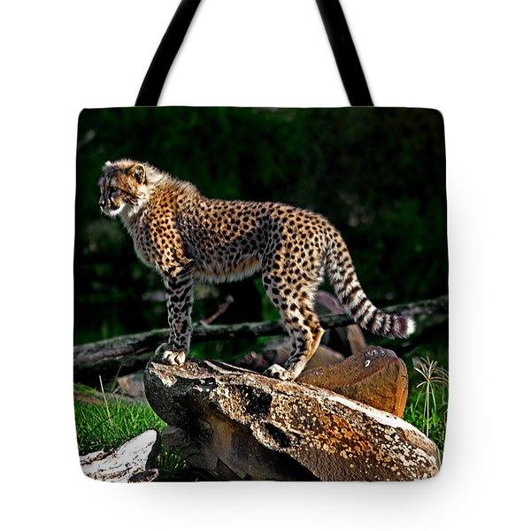 Cheetah Cub Finds Her Pride Rock Tote Bag by Miroslava Jurcik