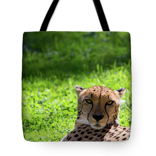 Tote Bag featuring the photograph Cheetah Face by Rebecca Cozart