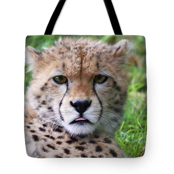 Tote Bag featuring the photograph Cheetah by MGL Meiklejohn Graphics Licensing