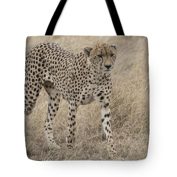 Cheetah On The Move Tote Bag by Pravine Chester