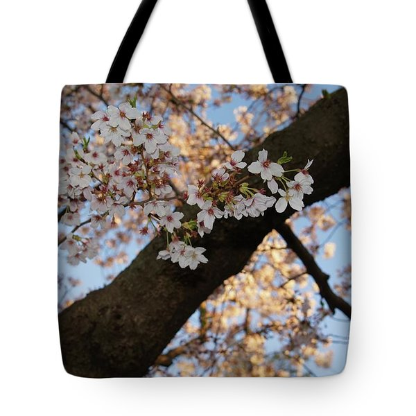 Cherry Blossoms Tote Bag by Megan Cohen