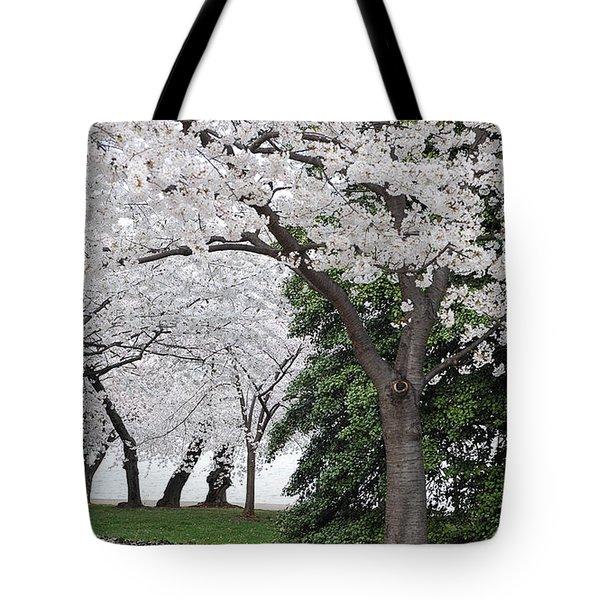 Cherry Blossoms Washington Dc Tote Bag by Steve Archbold