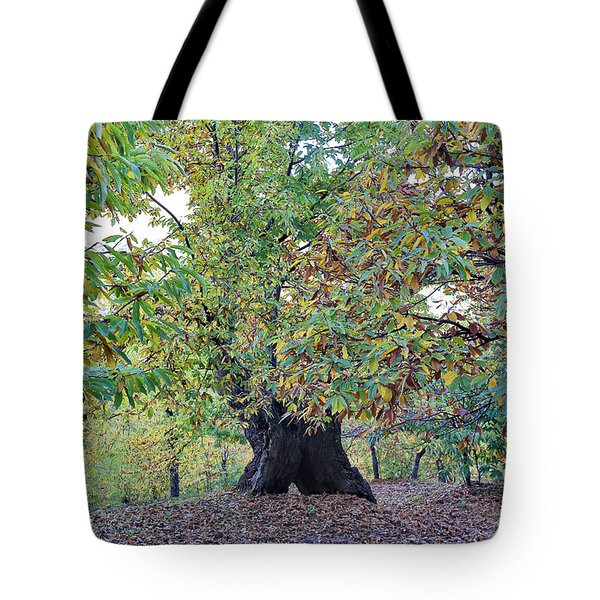 Chestnut Tree In Autumn Tote Bag