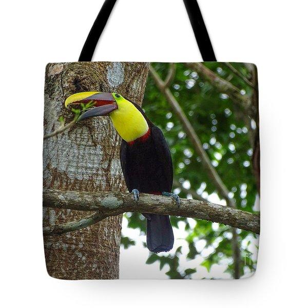 Chestnut-mandibled Toucan Tote Bag
