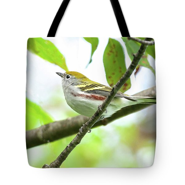 Chestnut-sided Warbler Tote Bag