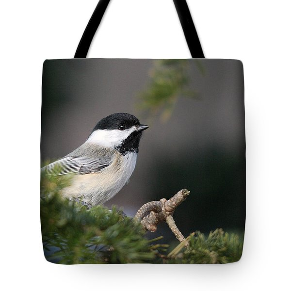 Tote Bag featuring the photograph Chickadee In Balsam Tree by Susan Capuano