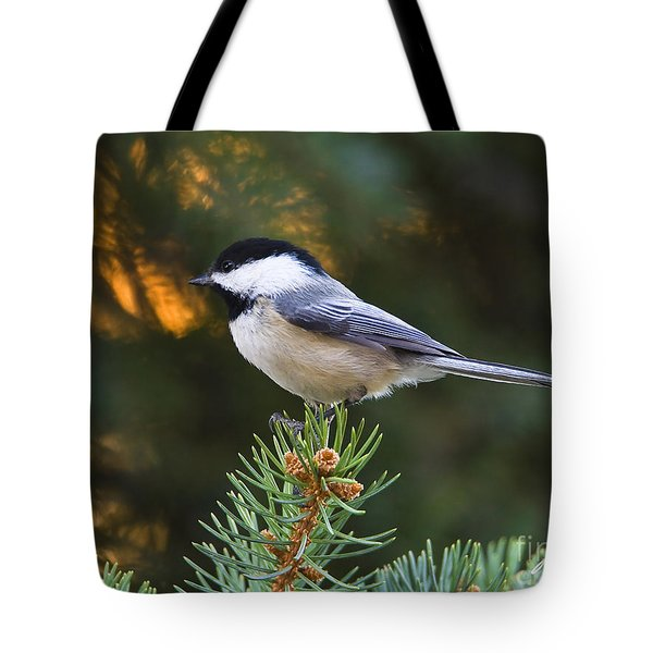 Chickadee In Spruce  Tote Bag