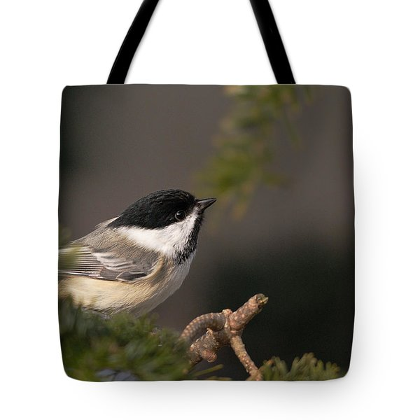 Tote Bag featuring the photograph Chickadee In The Shadows by Susan Capuano